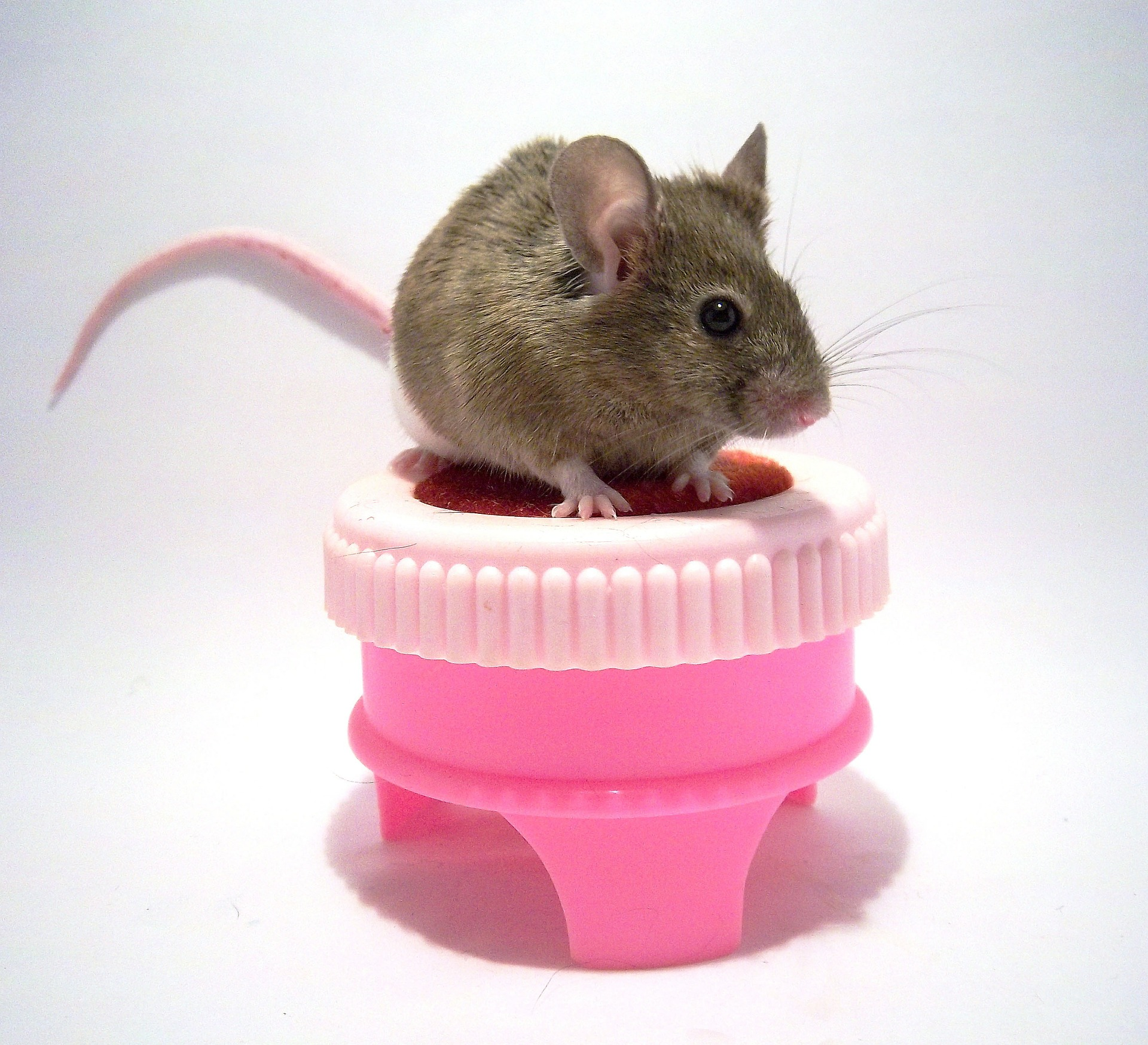 mouse430219-1452606416-70.jpg