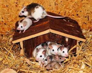 mousefamily-1452604971-20.jpg