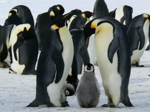 penguins429-1450263669-48.jpg
