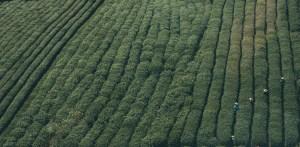 plantage731-1520437224-70.jpg